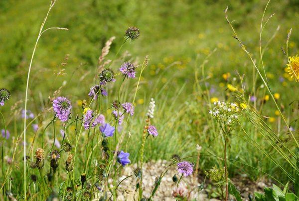 Artenvielfalt Wiese © Egger Judith I AVS
