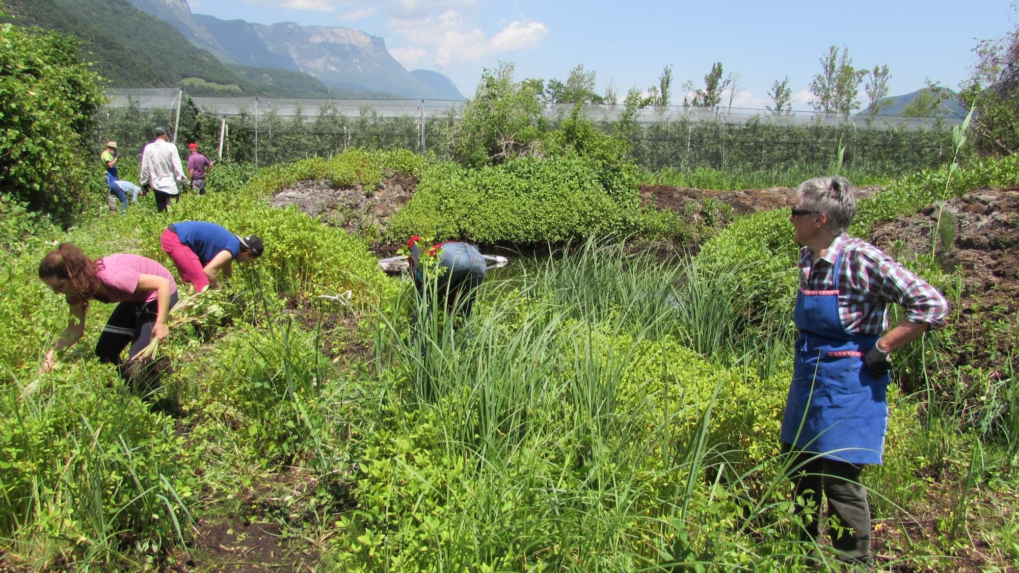 Biotoppflegeaktion am Kalterer See