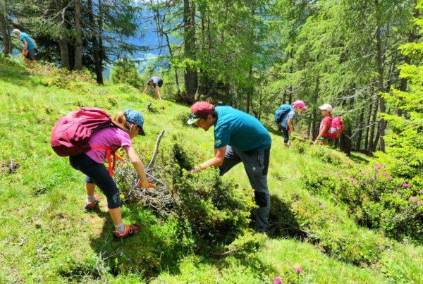 Freiwillige Helfer I Almpflegeaktion I ©Martin Oberhofer I AVS