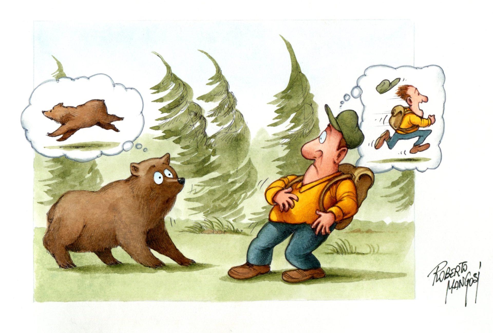 Wandern im Bärengebiet
