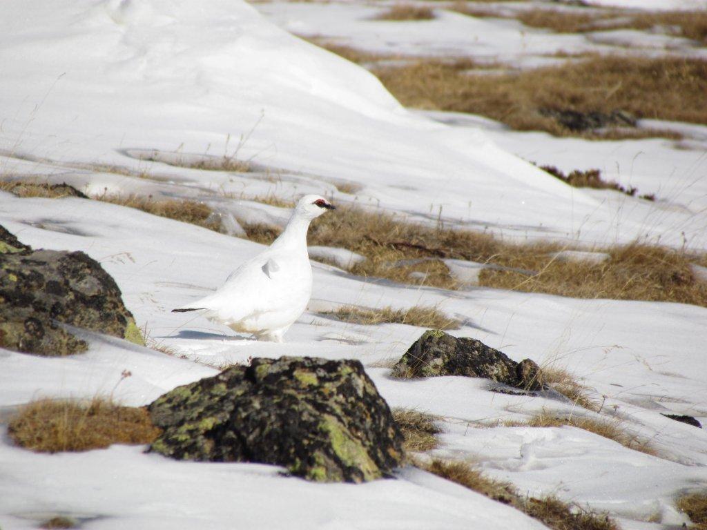 Bergsportler und Wildtiere im Winter