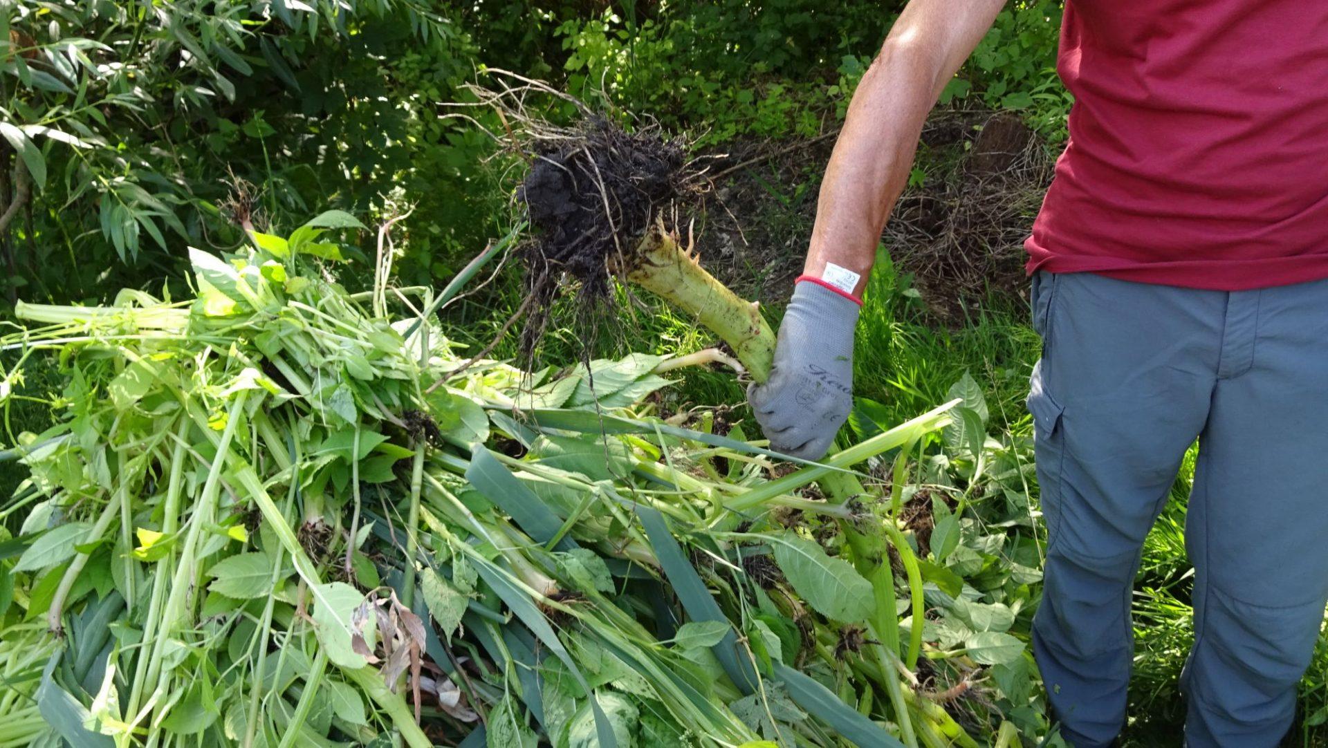 Biotoppflege am Kalterer See